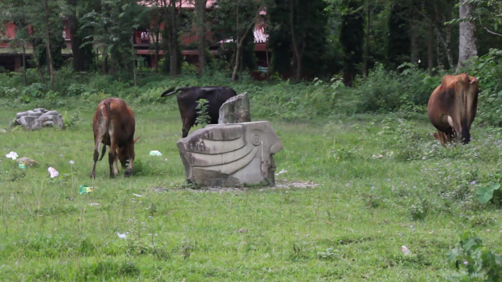 पोखराको फेवाताल स्थित कोमागाने पार्कमा बनाइएका मूर्तिहरु संरक्षणको अभावमा जीर्ण बन्दै